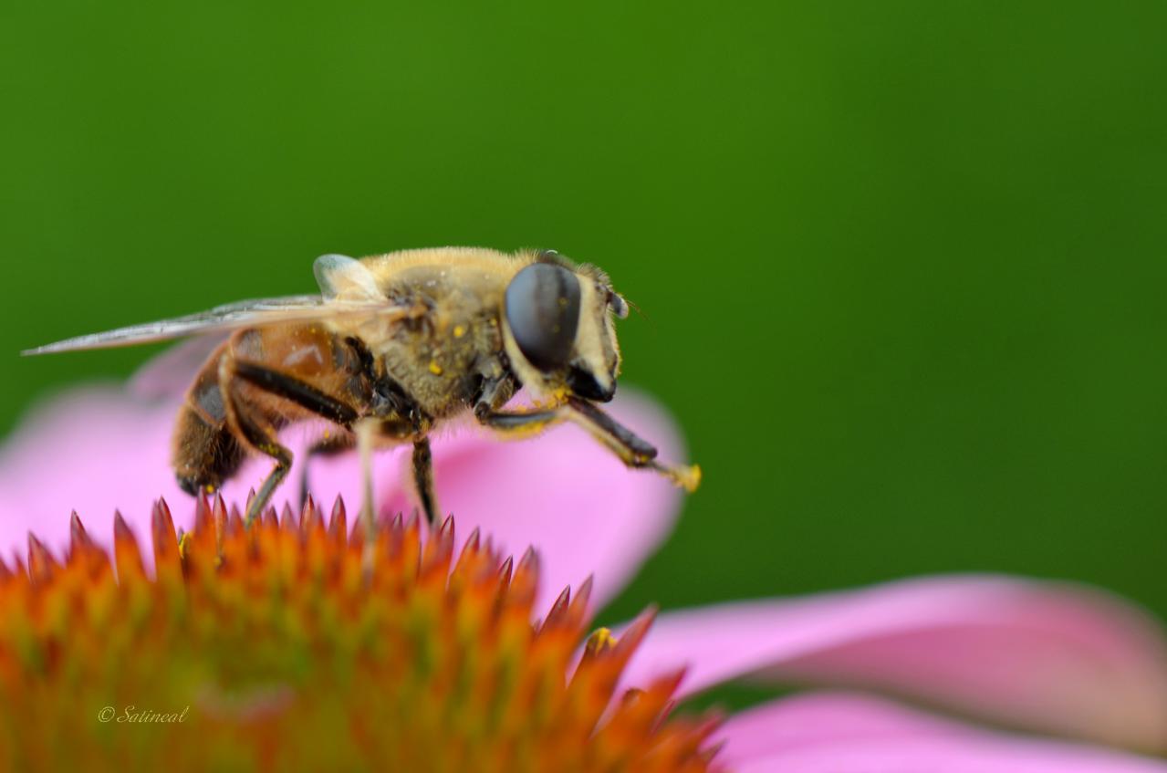 la toilette de l' abeille ©