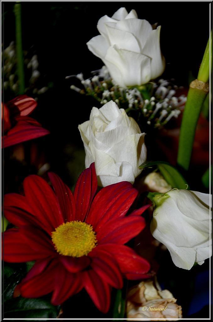 Extrait de bouquet (F)