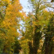 La voie verte en automne