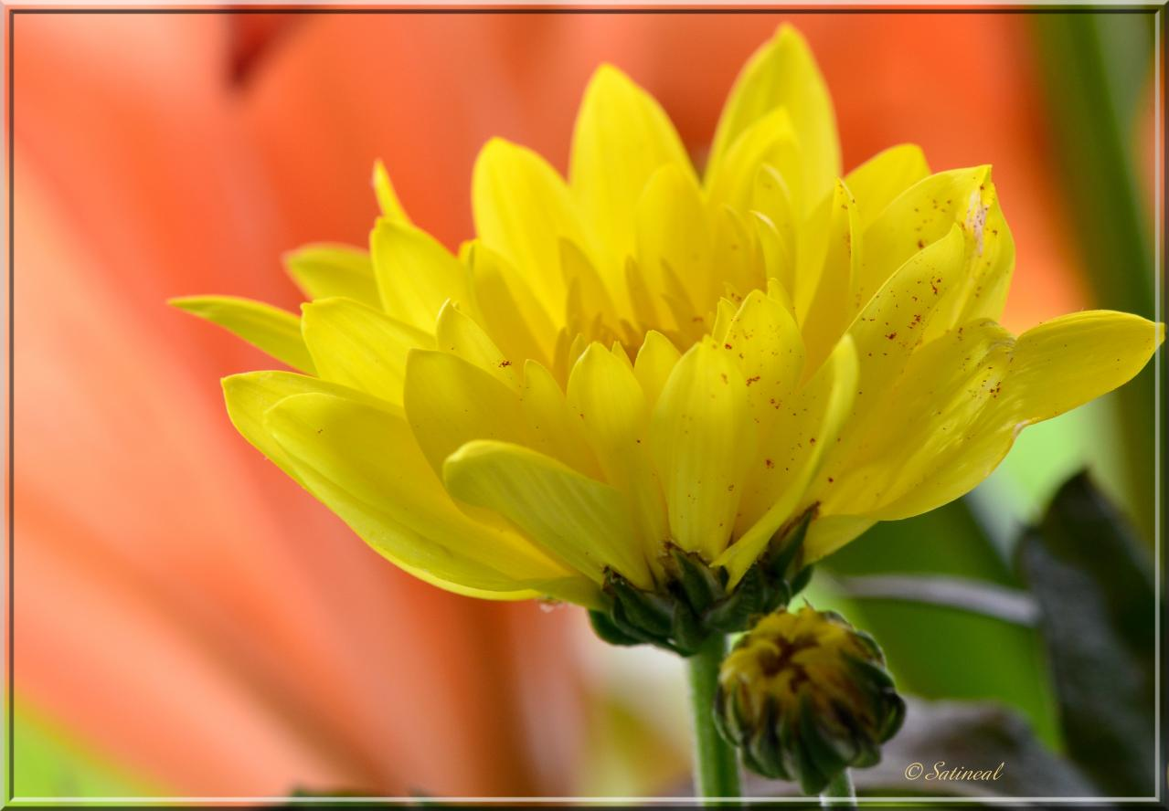 Au coeur du bouquet