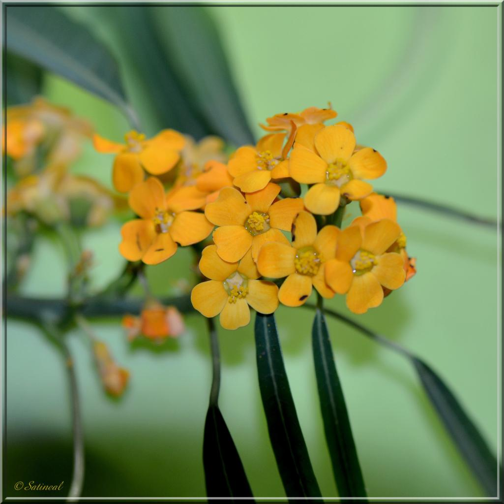 Minis fleurs et tendre vert