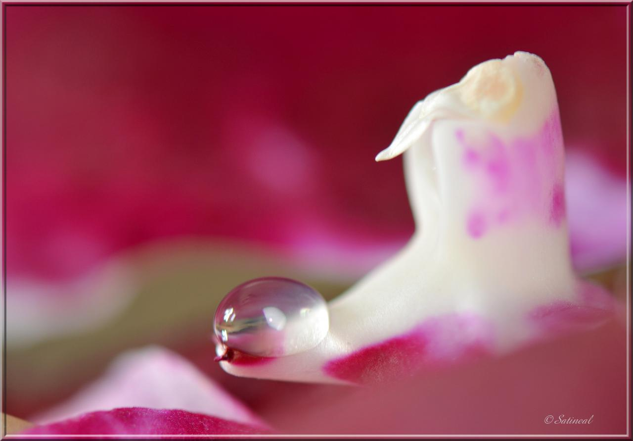 © orchid'eau