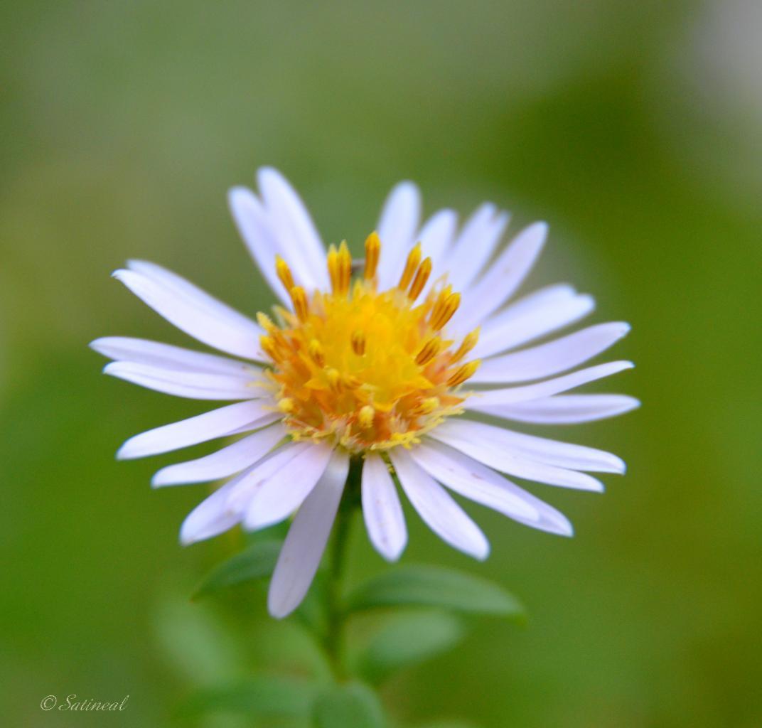 P'tite fleur sous la pluie.....